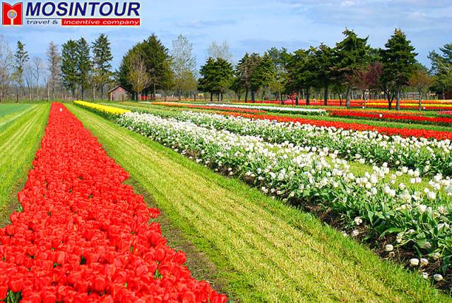 Парк цветов кёкенхоф keukenhof
