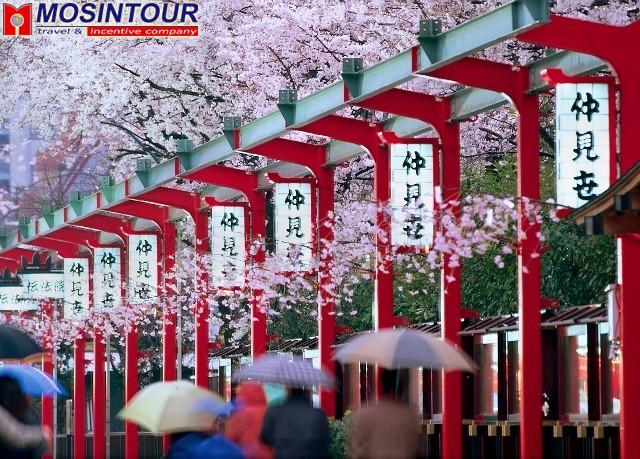В Японию самостоятельно только приятные воспоминания