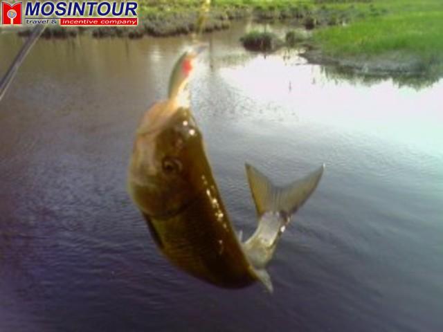 клюет ли рыба в ветер