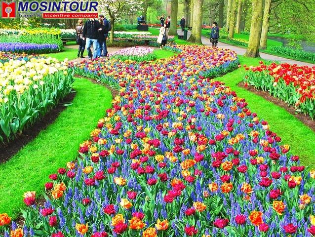 цветы голландии фото калининград