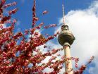 Берлин - современный мегаполис, культурный и экономический центр ЕС, Тур Берлин (Потсдам, Дрезден)